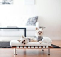 B.Pet Design for animals